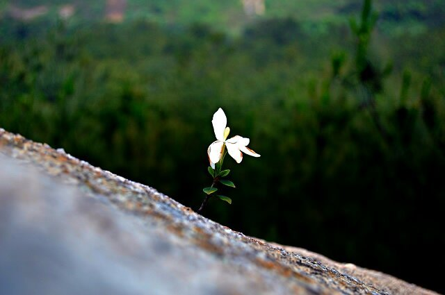 flower in a cliff